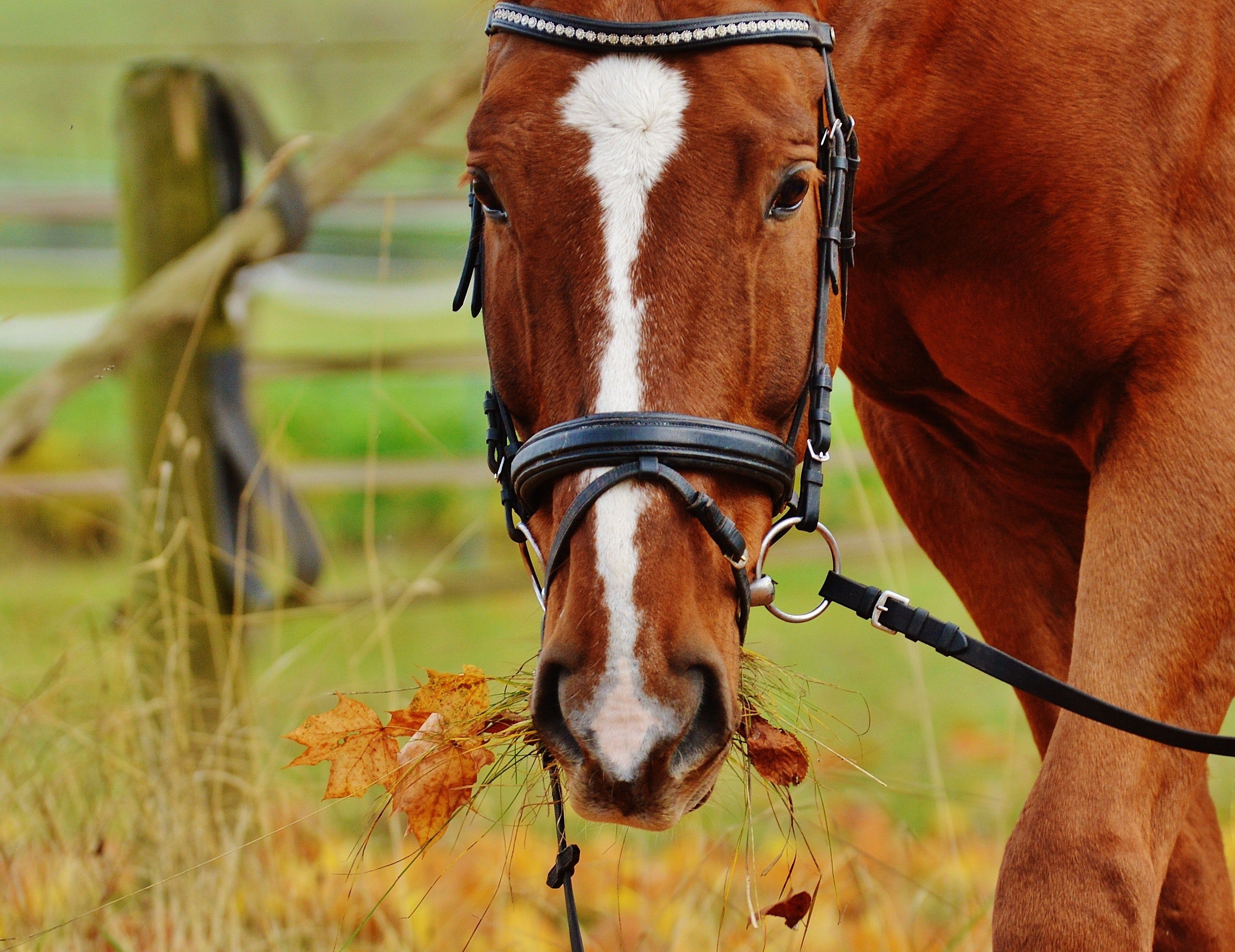 The importance of equine digestive health