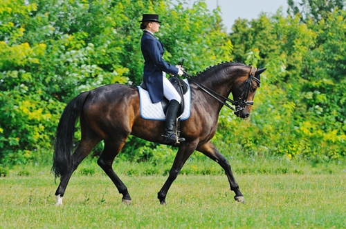 A dressage rider in traditional garb.