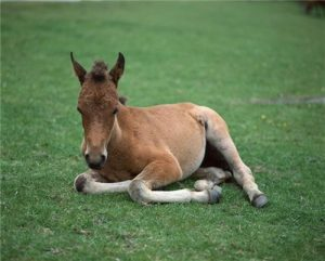 All horse owners have their own style of weaning foals - whether abrupt or gradual - but all agree the foal should be feeding independently before the process begins.