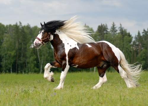 A horse has about 205 bones in its body.