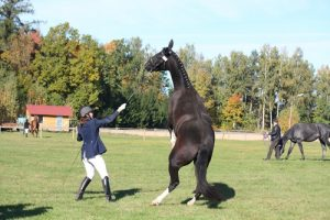 A scared horse can pose dangers for both the animal and the handler.