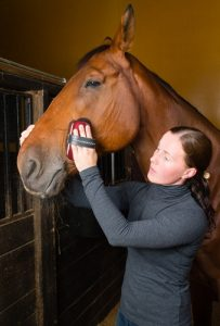 How much time do you dedicate to your horse?