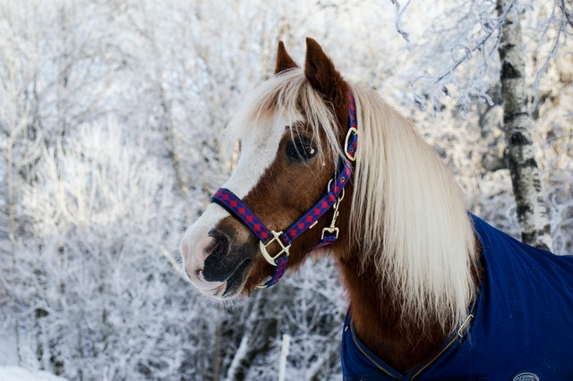 Important winter care tips for arthritic horses