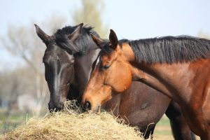 The 3 best vitamins for your horse's diet