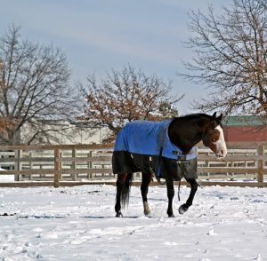 A bay stallion walks in the snow with a blanket.