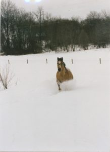 Get your horse ready for winter.