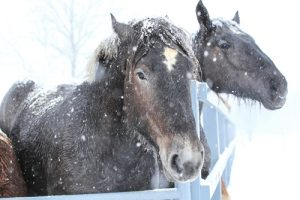 Horses still need to exercise and stay active, even if the weather outside is frightful.