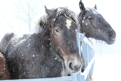 Keep your horse healthy this winter