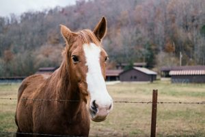 Noticing the position of the horse's ears can help indicate what mood it's in.