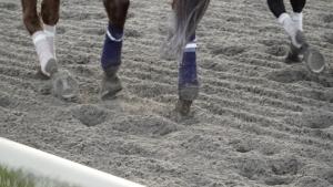 Keep horses active