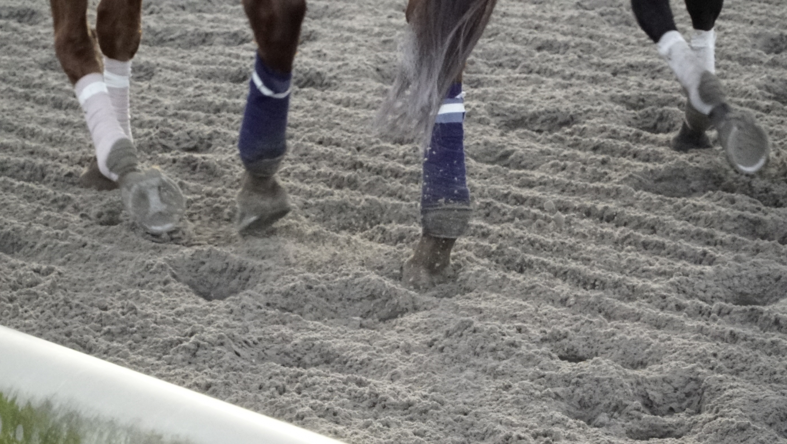 3 ways to keep your horse active