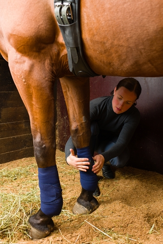 Poultice leg care for horses