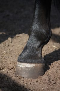 Always inspect your horse's hooves after riding or training.
