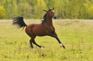 A lot goes into budgeting for a horse than originally expected.