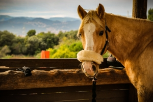 horse stretching blog