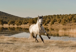 horse weight