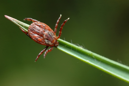 Here's how to look out for ticks on your horse.