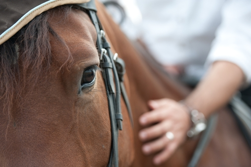 Researchers say positive reinforcement is the key to enhancing a horse's memory.
