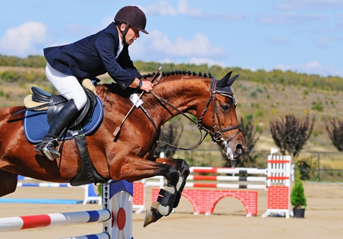 Showjumping horses have exceptionally high risk for developing gastric ulcers.