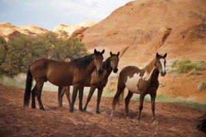 Eastern equine encephalitis is especially harmful for horses.