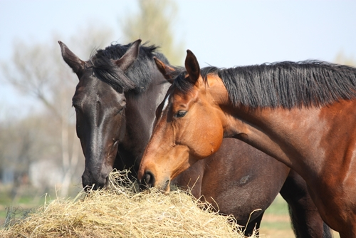 Introducing horses can sometimes be a tricky affair. It takes the right timing and spacing to be successful.