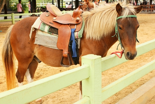 There's many kinds of horse breeds, including the Egyptian Arabian.