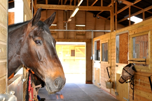 Having the right facility for your horse is about planning ahead.