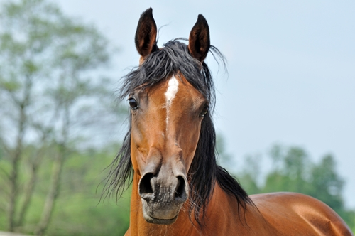 Like humans, horses use their faces to express emotions.