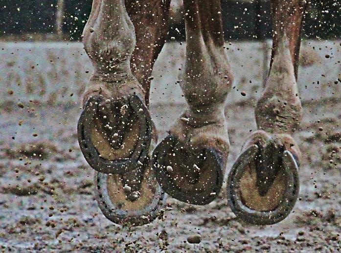 Clean hooves