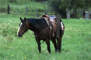 Fitting a saddle properly is key to the health of your horse.