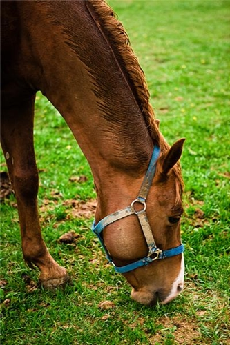 The disease is suspected to be linked to chemicals in grazing grass.