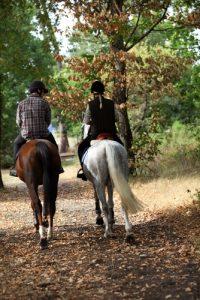 horses like horses