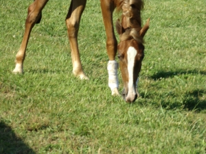 Horse health in climates