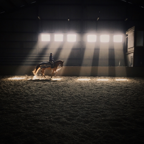 Dressage is about the unity between horse and rider.
