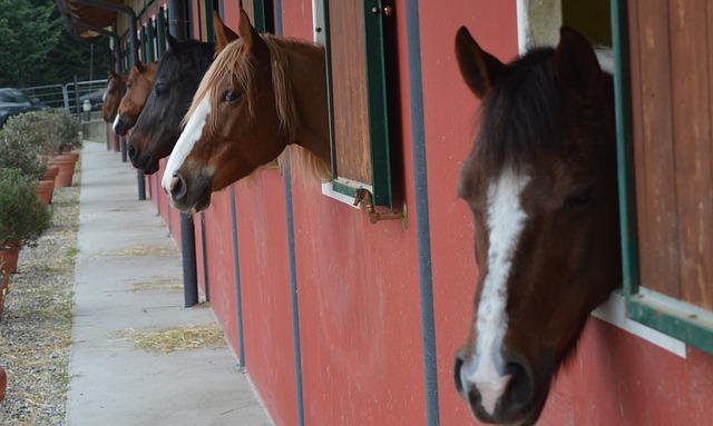 smart horses