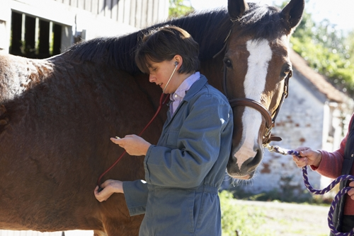 Becoming a horse vet is a great way to support the animals you love.