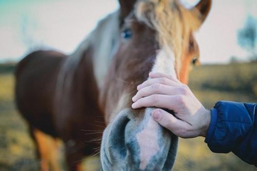 Training horses is a very rewarding career.