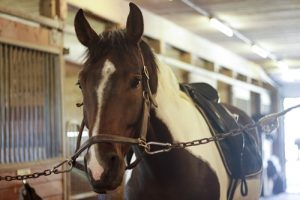 Your aging horse needs specific care.