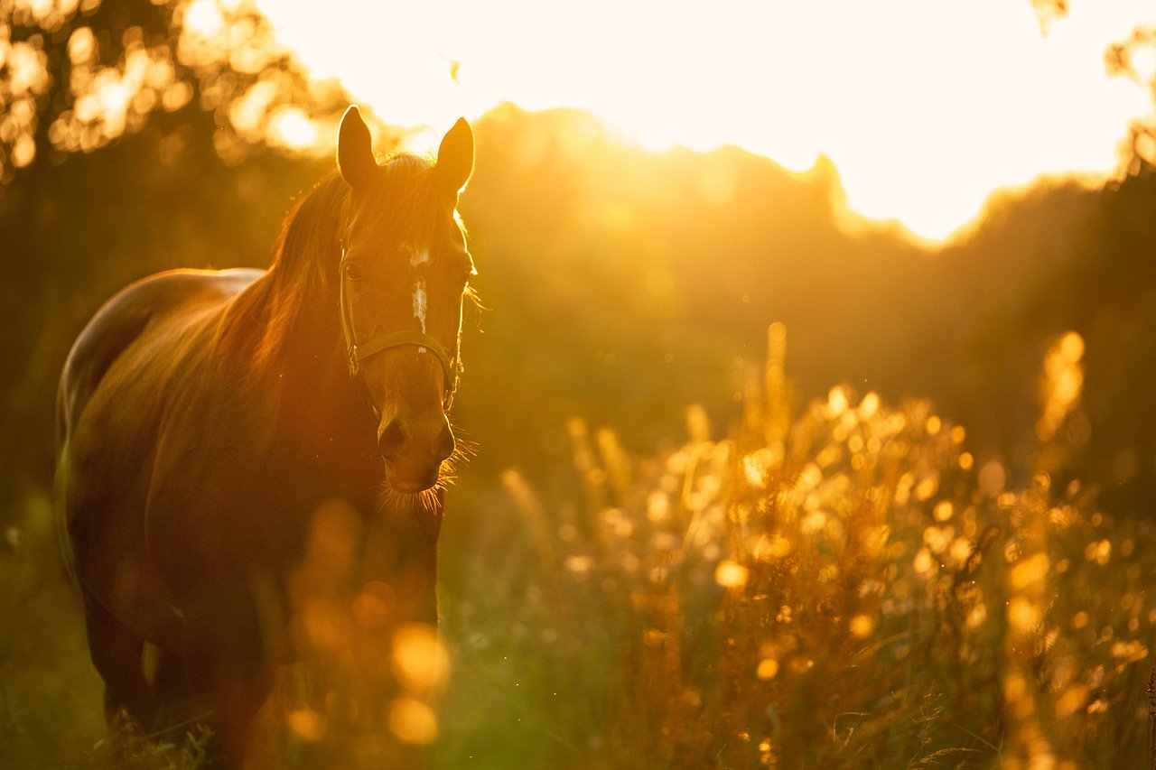 Health tips we can learn from horses