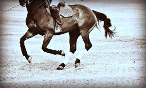 Keeping your horse's hooves healthy is an important aspect of care.