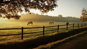 understanding equine ulcers in horses