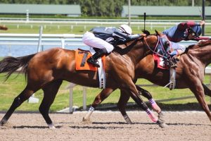 ulcers most common among active horses