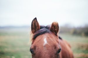 A vitamin deficiency could explain why your horse is nervous.