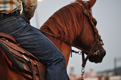 Tying up can occur when horses are forced to perform beyond their capabilities.