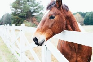 minor scrape can cause enough pain in horse