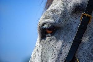 vitamin b in horses