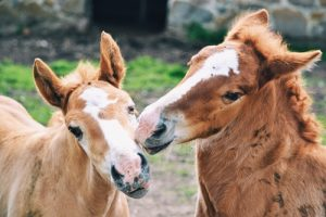 Foals have demanding nutritional needs.
