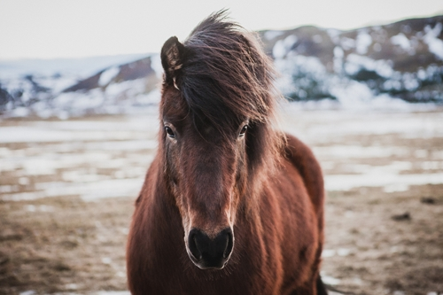 Horses respond equally well to visual and auditory signals.
