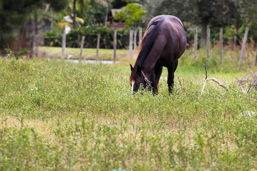 Numerous factors contribute to equine obesity.