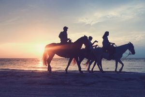 Many people uses retired racehorses for other sports or pleasure riding.